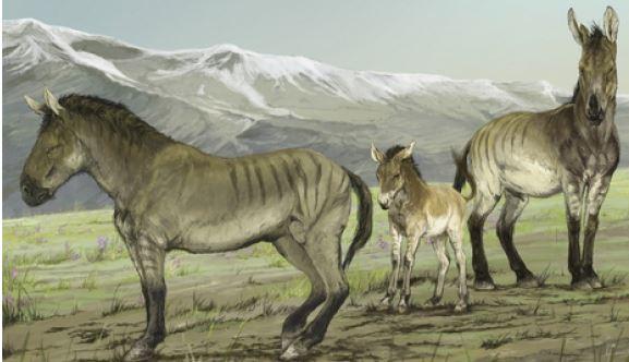 Ice age fossils from Yukon help identify new horse genus