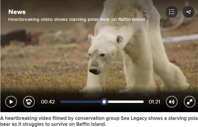 Arctic Warming globalnews.ca news starving polar bear climate change Baffin Island no snow no ice